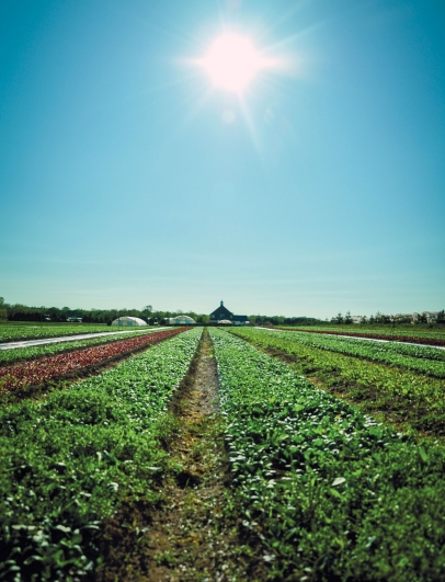 A view of Blue Moon Acres farm across rows of young lettuces.