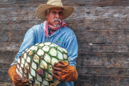 farmer holding agave crop