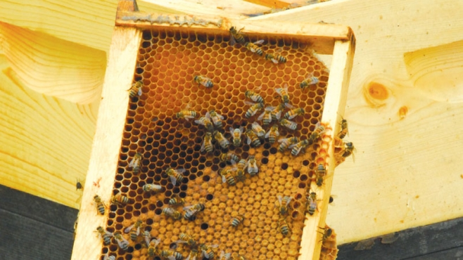 Home Sweet Honey